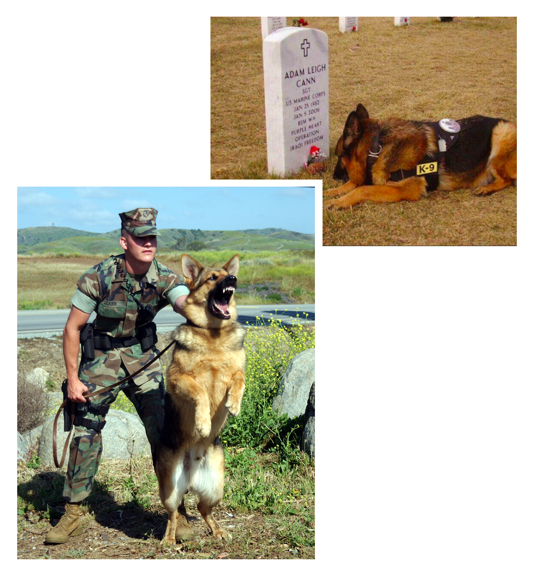 Top Right: Bruno laying down at Sgt. Adam Cann's grave. Bottom Left: Bruno and Sgt. Adam Cann in action.